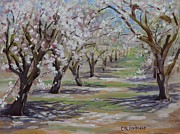 Modesto Paintings - Almond Blossoms by Cheryl Bloomfield