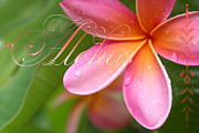 Hawaiian Plumeria Art - Aloha by Sharon Mau