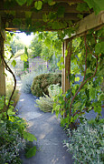 Marilyn Wilson - Along the Garden Path