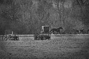 Horse And Buggy Framed Prints - Amish Buggy Black and White Framed Print by David Arment