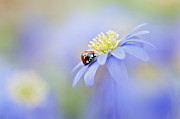 Ladybird Photos - Anemone Lady by Jacky Parker