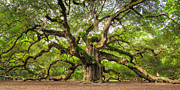 Angel Oak Tree Of Life Print by Dustin K Ryan