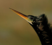 Turkey Art - Anhinga by Cindi Ressler
