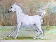 Janina  Suuronen - Another arabian horse