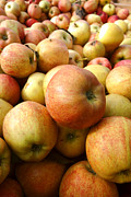 Local Food Photos - Apples by Olivier Le Queinec