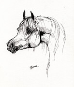 Horse Drawings Posters - Arabian Horse Drawing 6 Poster by Angel  Tarantella