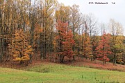 Autumn Color Print by Carolyn Postelwait