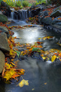 Beautiful Creek Posters - Autumn Creek Poster by Matt Dobson