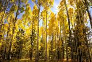 Saija  Lehtonen - Autumn Gold