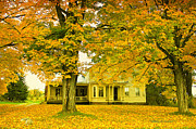 Maple Syrup Posters - Autumn in Franklin Poster by Deborah Benoit