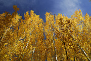 Yellow Leaves Posters - Autumn leaves Poster by Guido Montanes Castillo