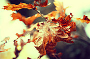 Fading Dream Photos - Autumn Leaves by Jenny Rainbow