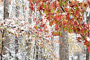 Williams Photos - Autumn Snow by Thomas R Fletcher