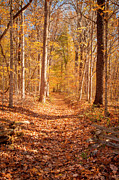 Natchez Trace Prints - Autumn Trail Print by Brian Jannsen