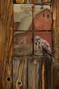 Barn Digital Art Metal Prints - Barn Owl Metal Print by Jack Zulli