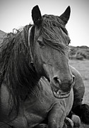 Wild Horse Prints - Basque Horse Print by RicardMN Photography