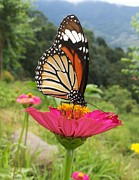 Smrita Pradhan - Beautiful Butterfly