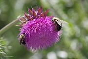 Tannis  Baldwin - 2 Bees