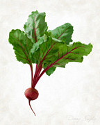 Isolated Prints - Beet Print by Danny Smythe