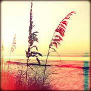 Sea Oats Framed Prints - Before Day Framed Print by Chris Andruskiewicz