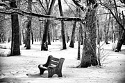 The Garden Bench Prints - Bench Under the Tree Print by John Rizzuto