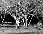 Park Benches Photos - Benches by Eric Lewis