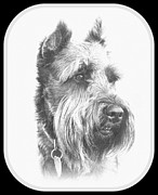 Schnauzer Art Photos - Benny the Miniature Schnauzer by Mickey Harkins
