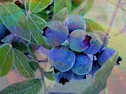 Design With Photography Prints - Berry Beautiful Print by Shirley Sirois