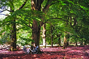 Groove Prints - Bikes in Hoge Veluwe National Park. Netherlands Print by Jenny Rainbow