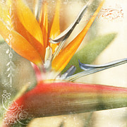 Strelitzia Art - Bird of Paradise - Strelitzea reginae - Tropical Flowers of Hawaii by Sharon Mau