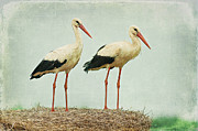 Stork Digital Art Posters - Black Storks Family Poster by Izabela Kaminska