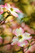 Blooms Of Spring Print by Darren Fisher