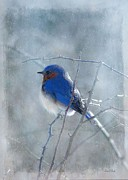 Bird In Snow Prints - Blue Bird  Print by Fran J Scott