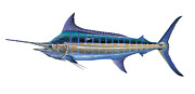 Striped Bass Paintings - Blue Marlin by Carey Chen