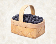 Studio Shot Paintings - Blueberry Basket by Danny Smythe