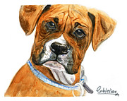 Boxer Painting Prints - Boxer Print by David Iglesias