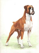 Boxer Painting Framed Prints - Boxer Dog Portrait Framed Print by Olde Time  Mercantile