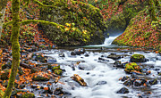 Colors Of Autumn Framed Prints - Bridal Veil Creek Columbia River Gorge Framed Print by Dee Browning