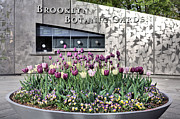 Landscapes Art - Brooklyn Botanical Garden by JC Findley