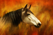 Textured Horse Art Framed Prints - Buckskin Framed Print by Ozana Sturgeon
