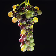 Bernard Jaubert - Bunch of grapes