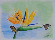 Strelitzia Painting Posters - 2 butterflies on a Bird of Paradise Poster by Kerstin Berthold