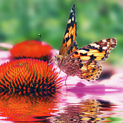 Mirroring Posters - Butterfly Poster by Angela Doelling AD DESIGN Photo and PhotoArt