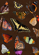 Butterflies Originals - Butterfly Collage by David Salter