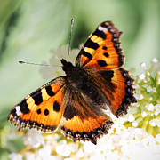 HJBH Photography - Butterfly
