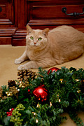Christmas Lights Photos - Cat and Christmas Wreath by Amy Cicconi