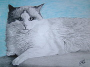 Animals Drawings Posters - Cat Poster by Cybele Chaves