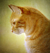 Flypaper Textures Photos - Cat Portrait by Margaret S Sweeny