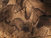 Horse Drawing Prints - Cave Paintings  Print by Javier Trueba and SPL and Photo Researchers