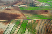 Aerial Photo Posters - Cereal Fields From The Air Poster by Guido Montanes Castillo
